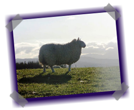 Highland Croft Produce - Quality Highland Lamb and Venison